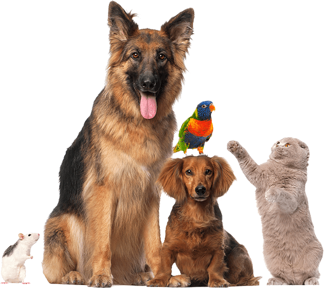 About TheGoodyPet newsletter