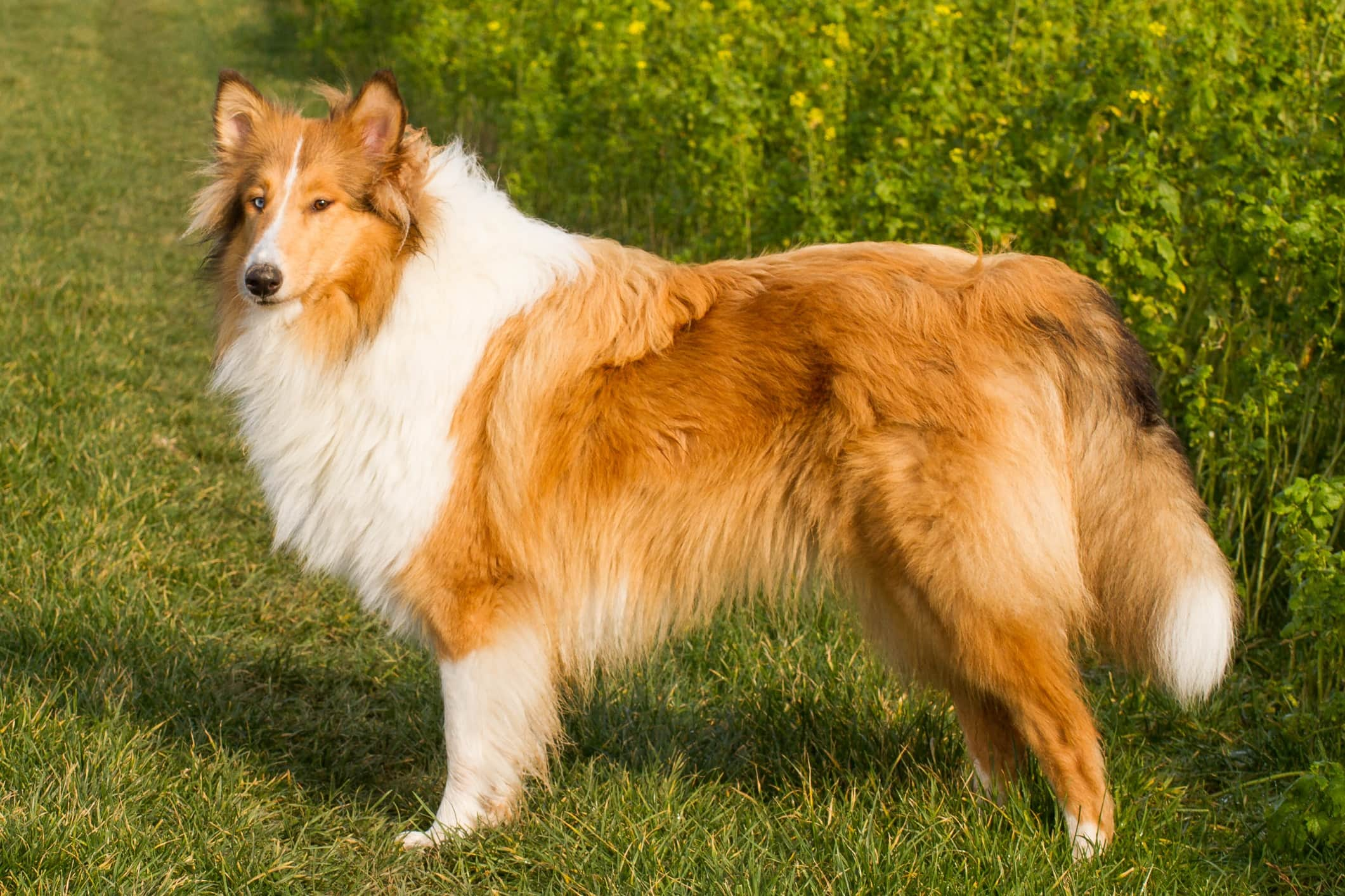 Our Top 23 Best Dog Breeds For Kids by The Goody Pet
