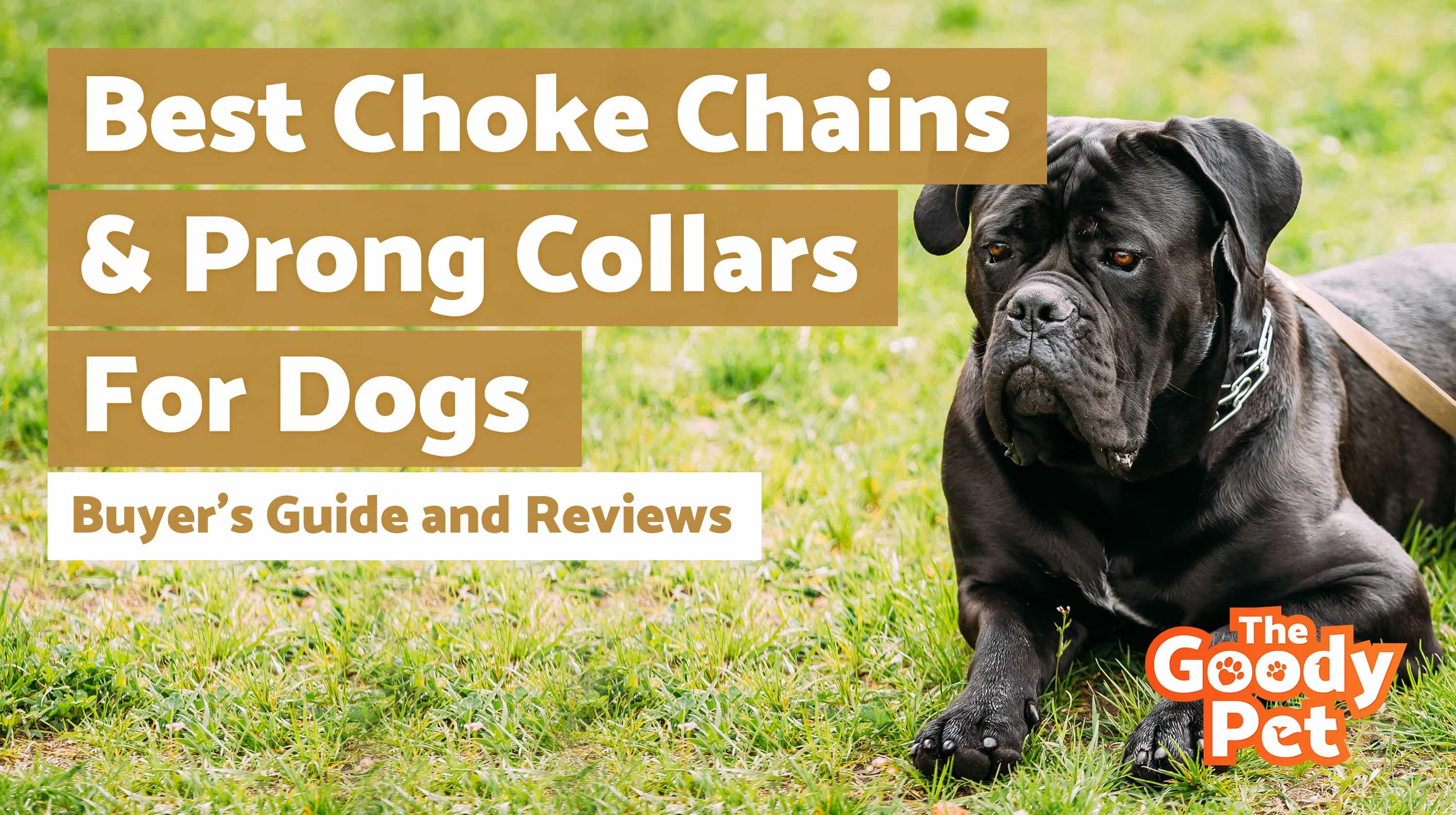 7 Best Choke  U0026 Prong Dog Collars  November 2019