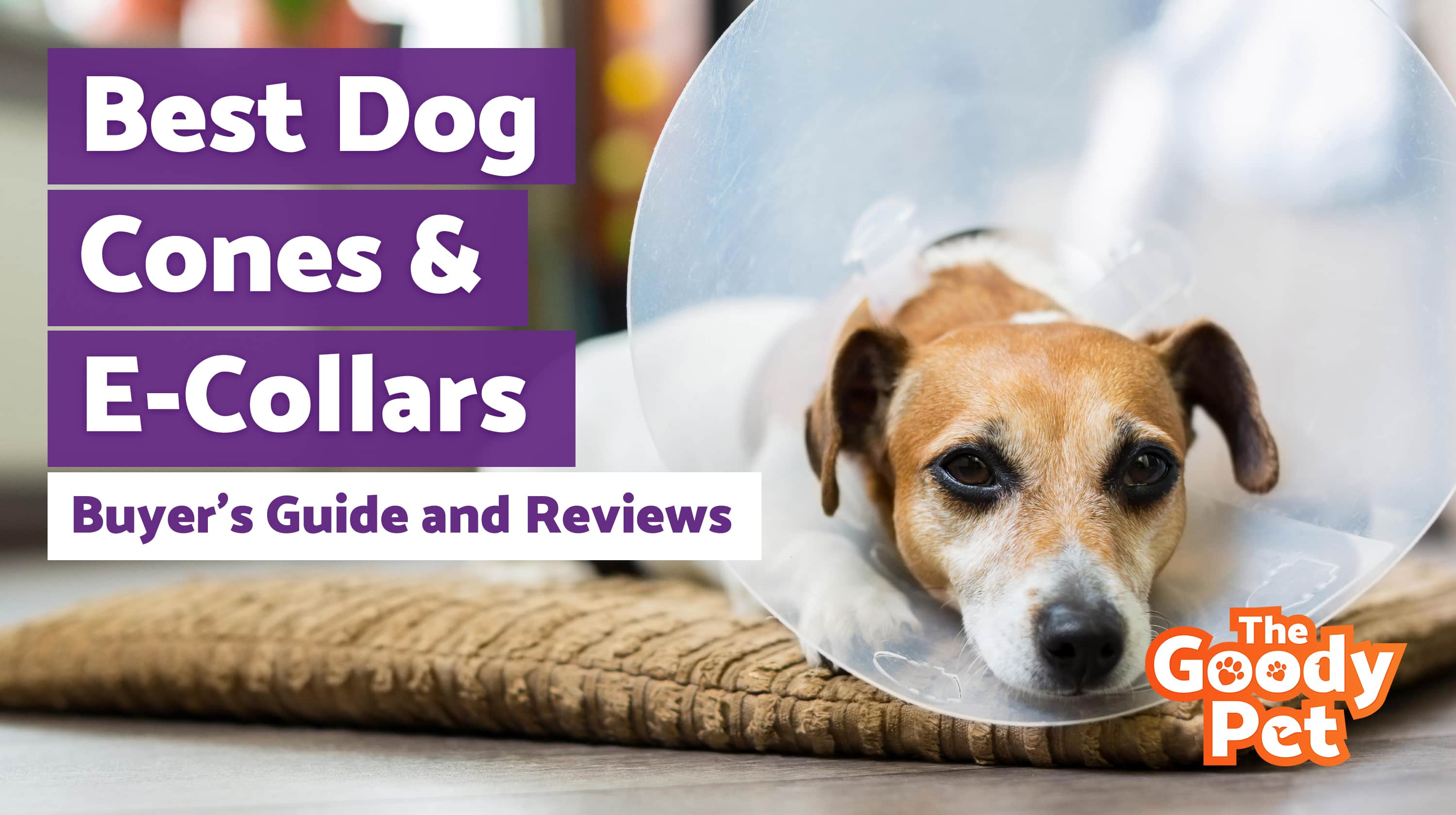 Best Dog Cones & Elizabethan Collars – Our 2019 Reviews & Top Picks