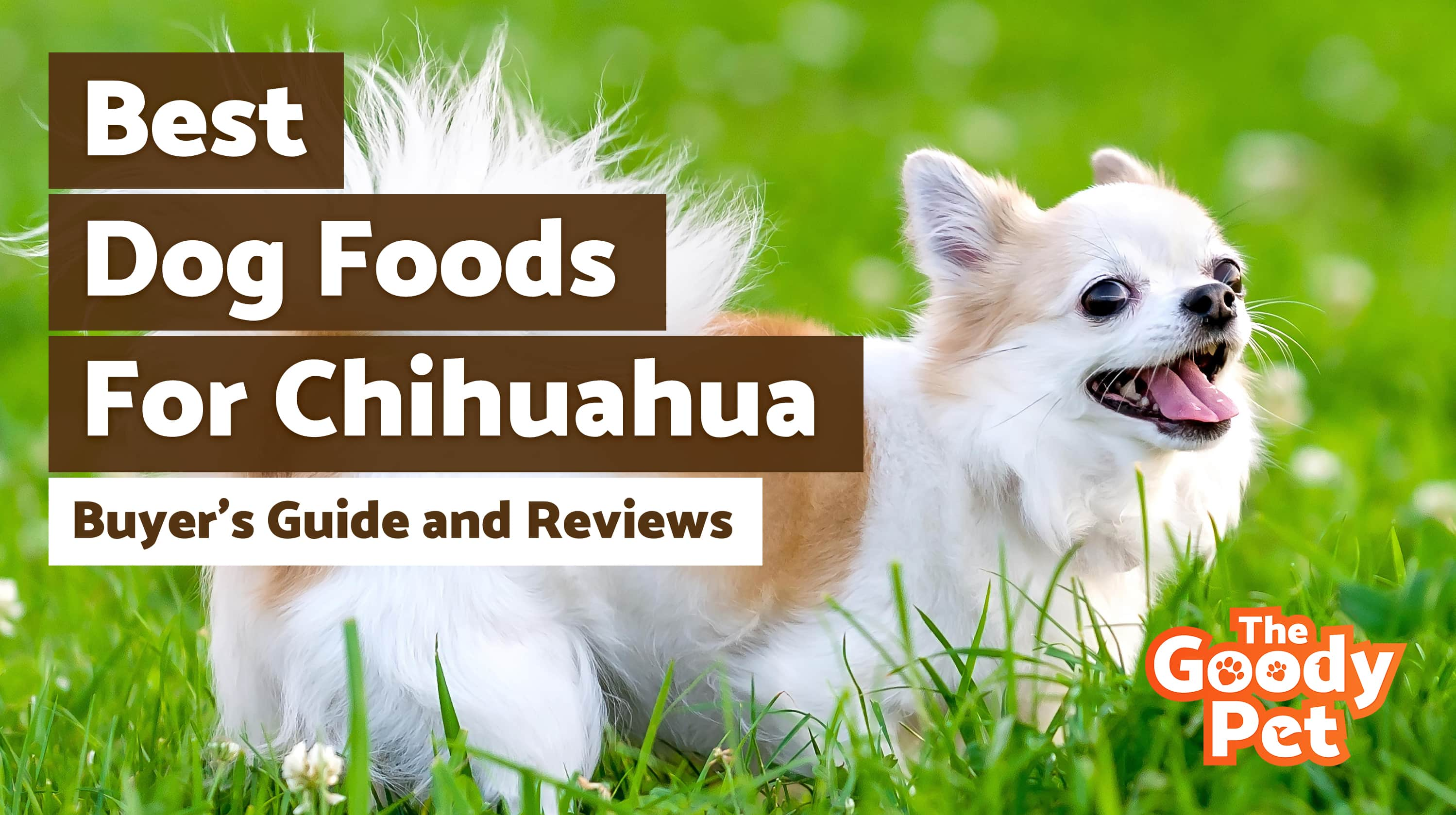 8 Best Dog Foods For Chihuahua (May 2019) | Buyer's Guide & Reviews | The Goody Pet