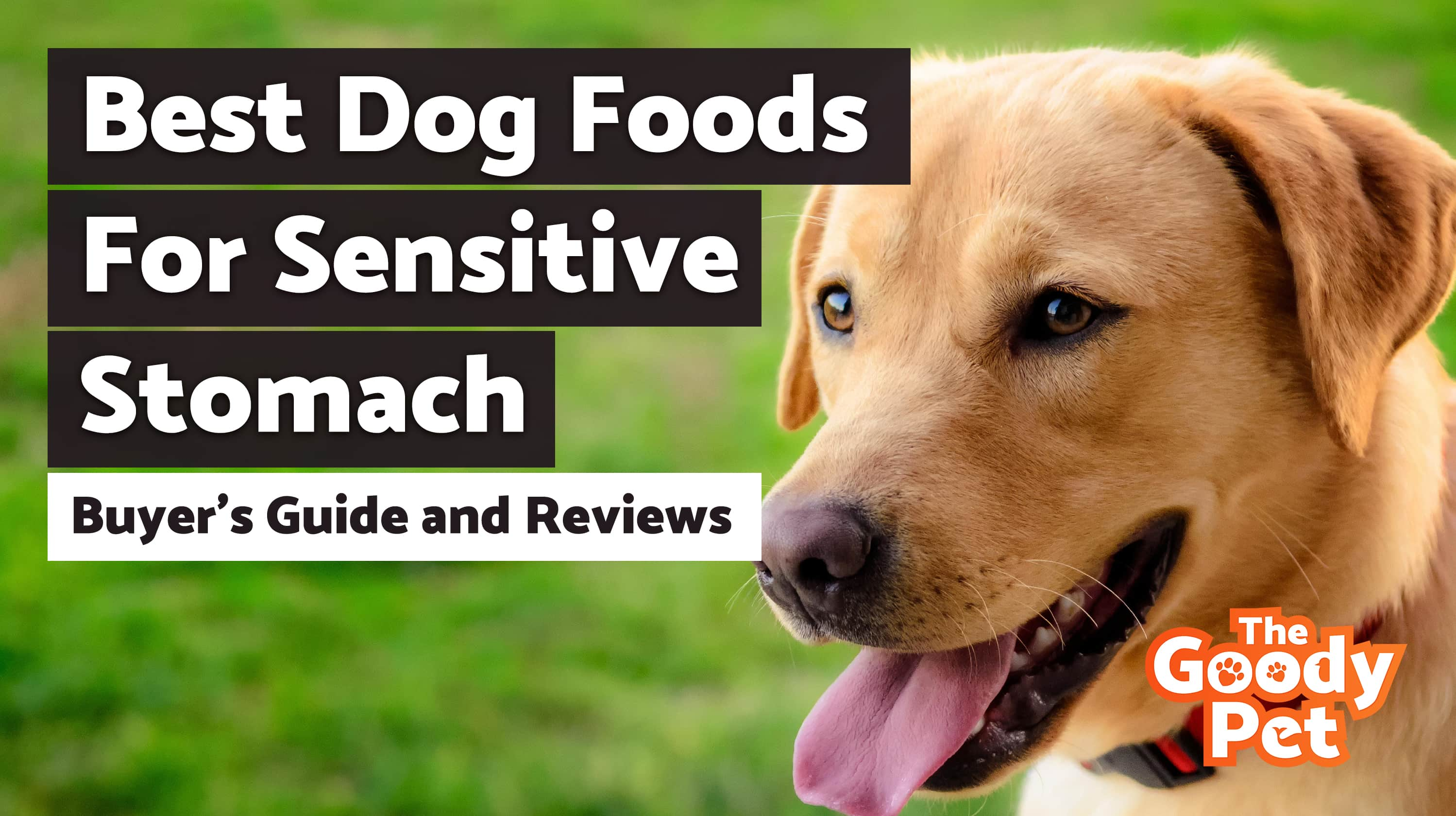 Best Dog Food For Sensitive Stomachs – Our 2019 Reviews & Top Picks