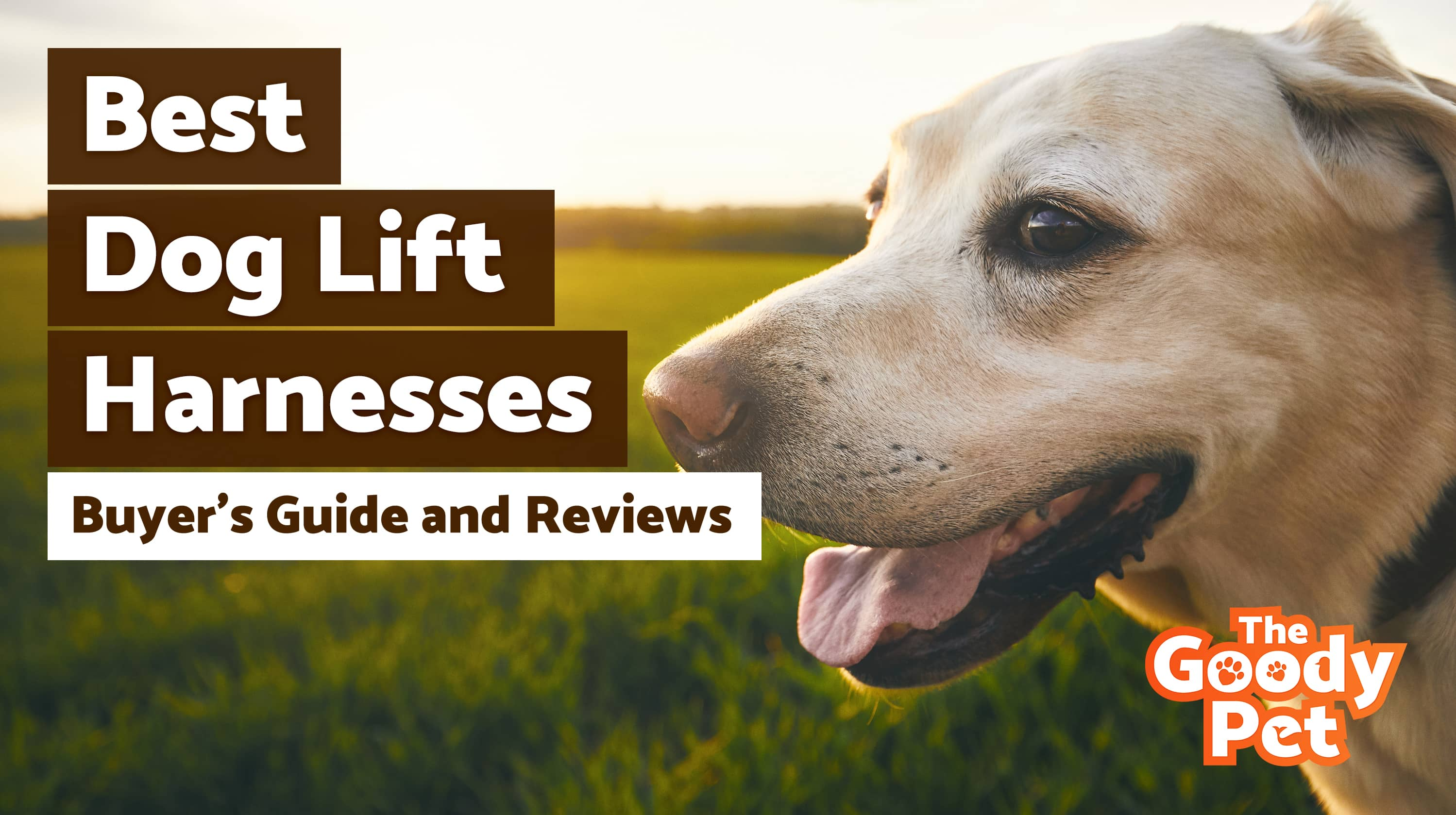 Best Dog Lift Harnesses For Your Injured Pooch – Our 2019 Reviews & Top Picks