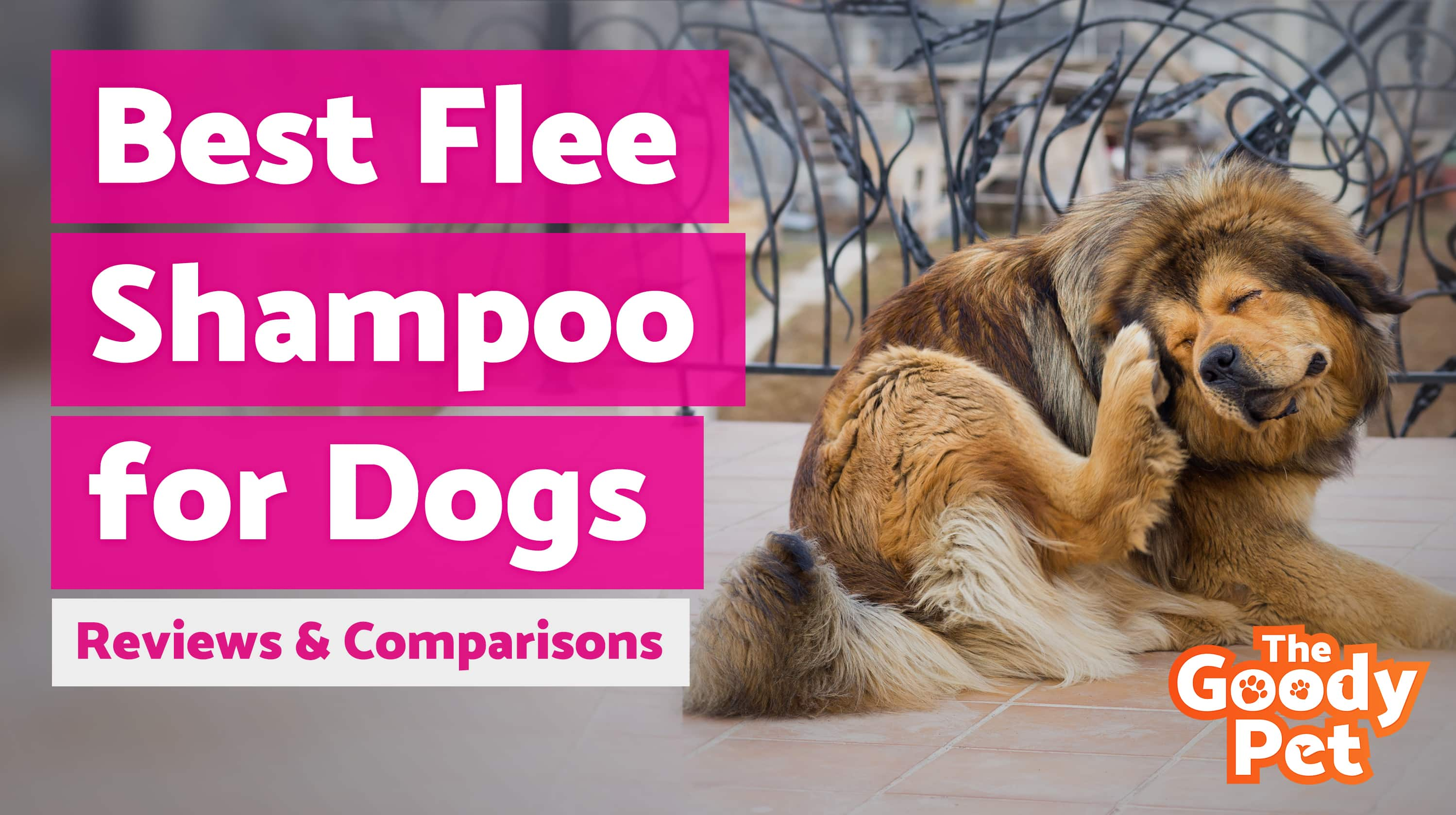 Best Flea Shampoo for Dogs (August 2019) | TheGoodyPet
