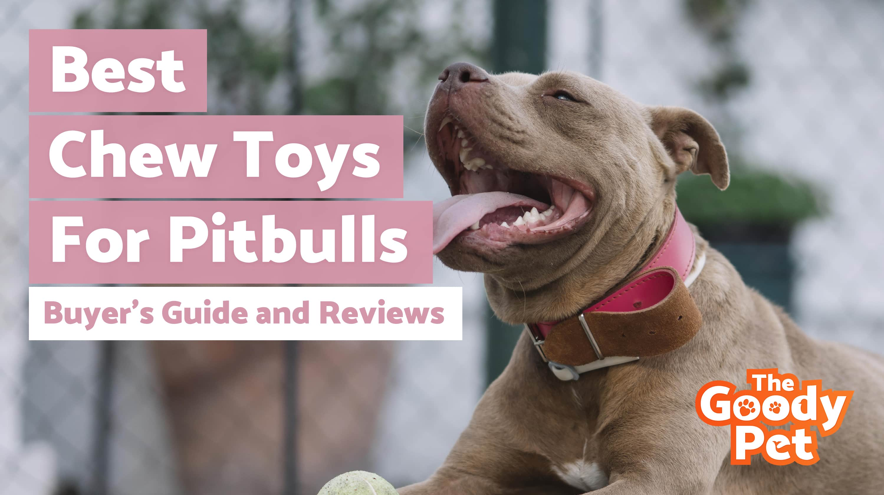 Best Indestructible Dog Chew Toys For Pit Bulls – Our 2019 Reviews & Top Picks