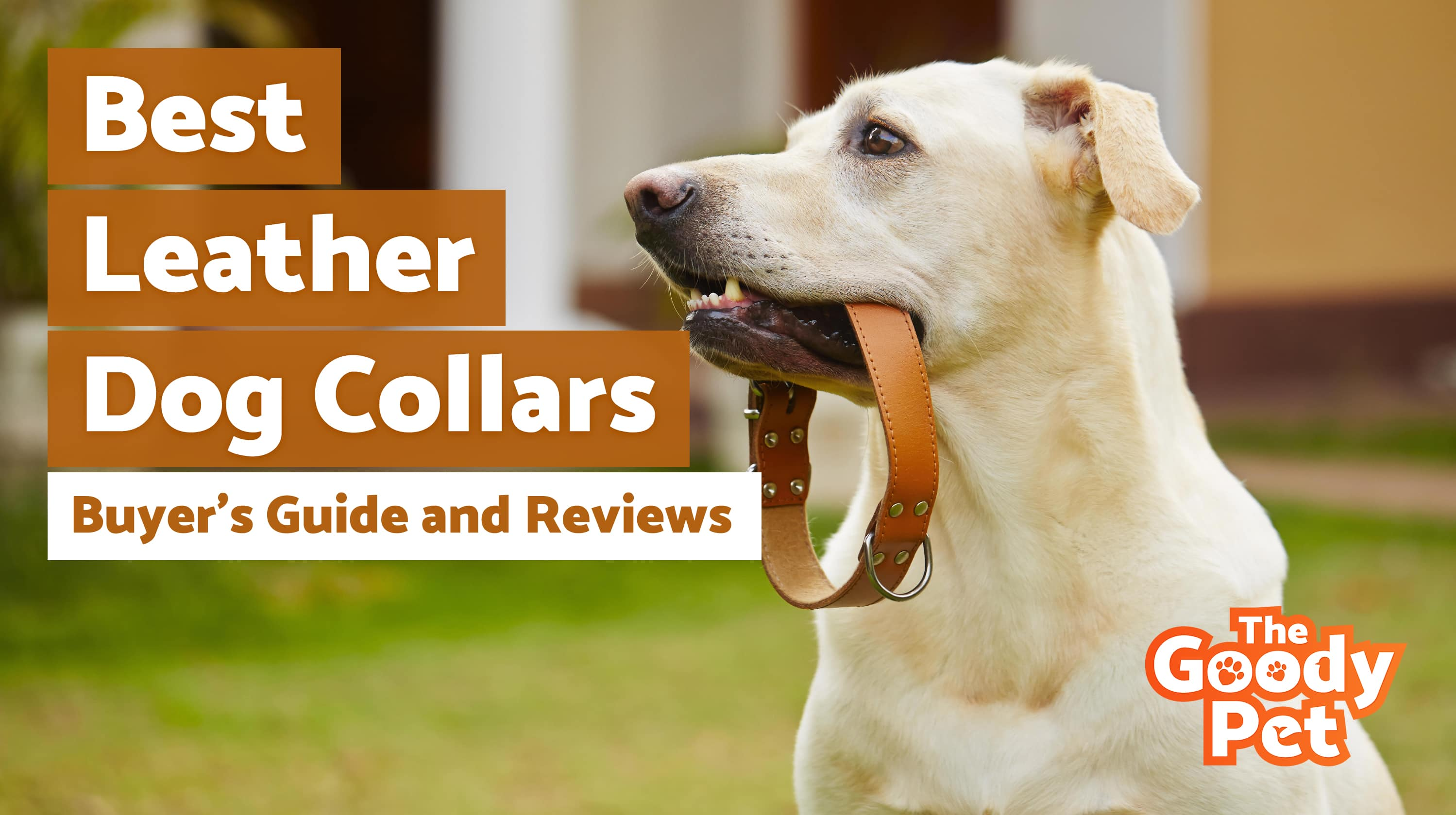 Best Leather Dog Collars For Your Pooch – Our 2019 Reviews & Top Picks