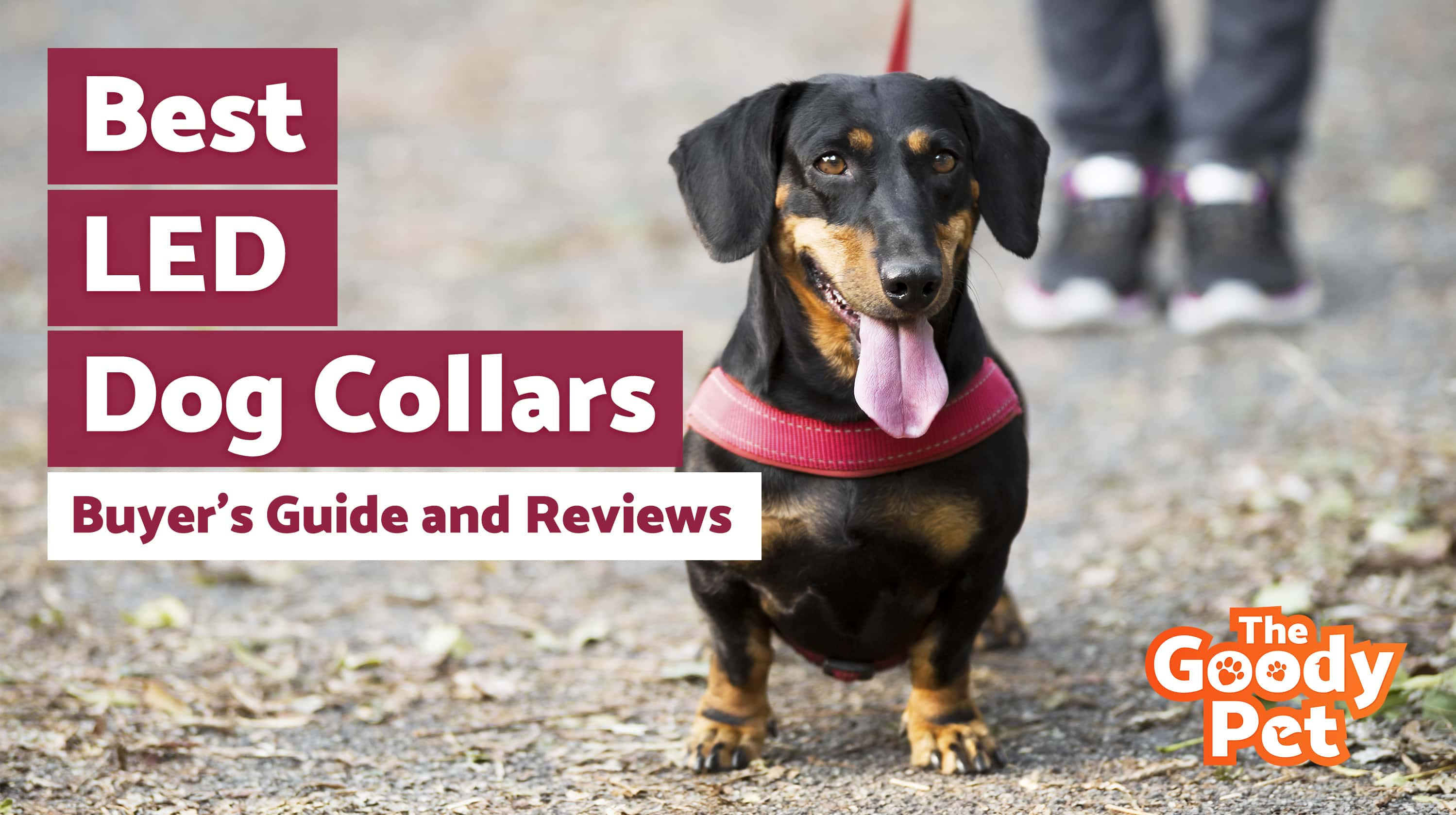 Best LED Dog Collars For Your Furry Friend – Our 2019 Reviews & Top Picks