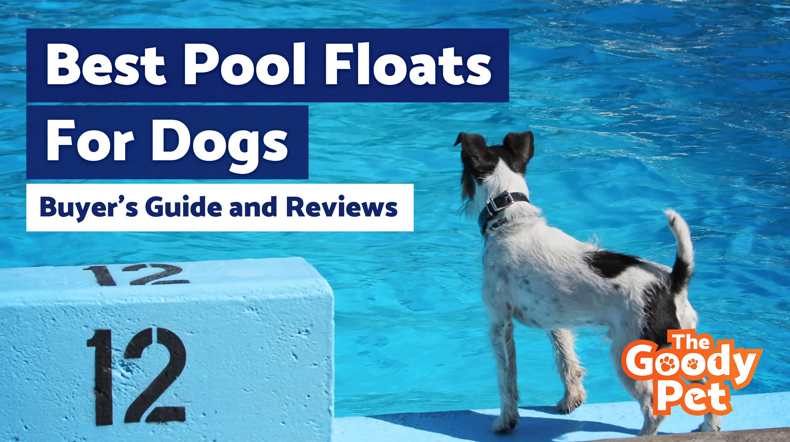 6 Best Pool Raft Floats For Dogs April 2019 Buyers Guide