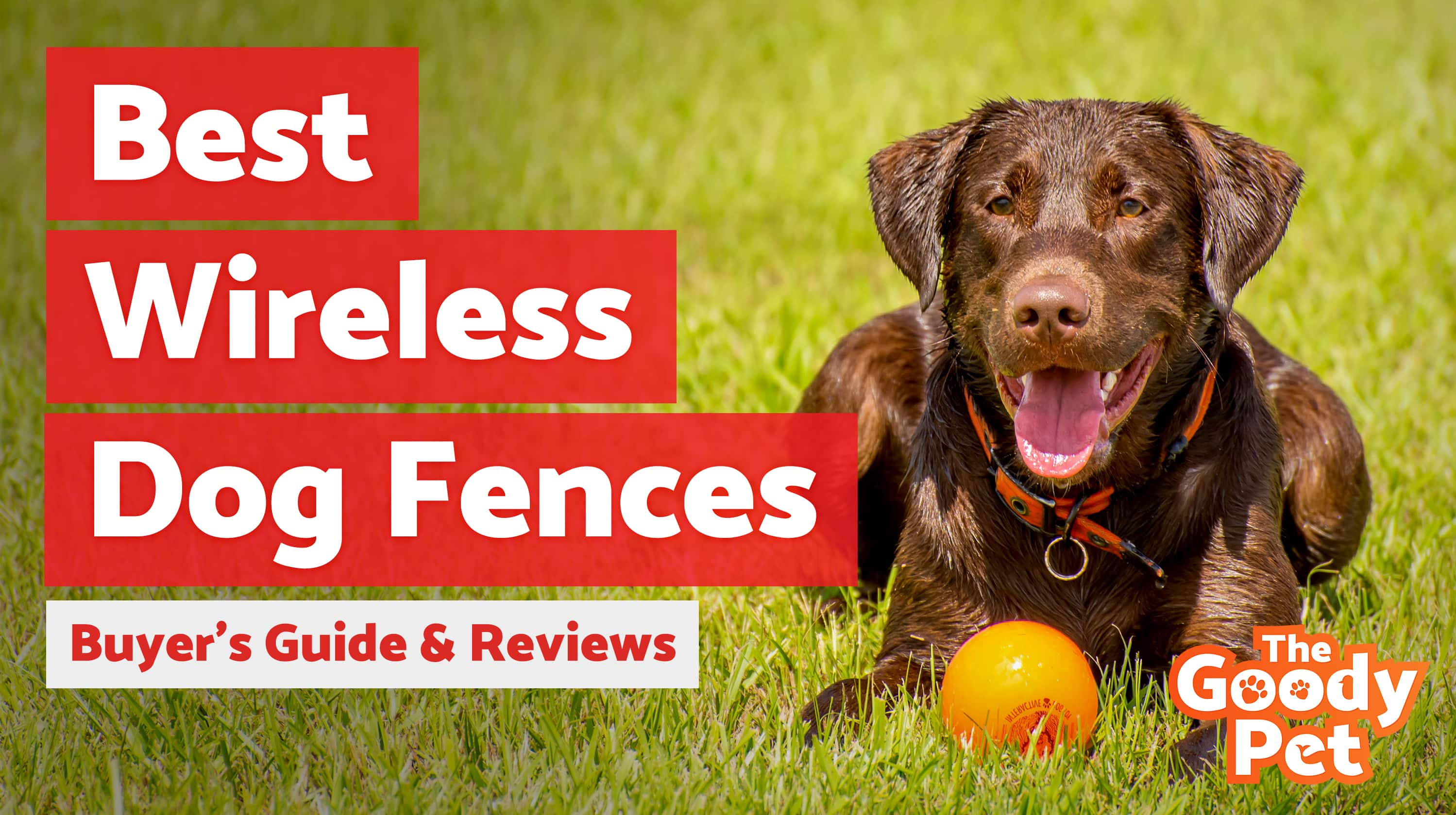 Best Wireless Dog Fence Systems April 2019 Buyers Guide And