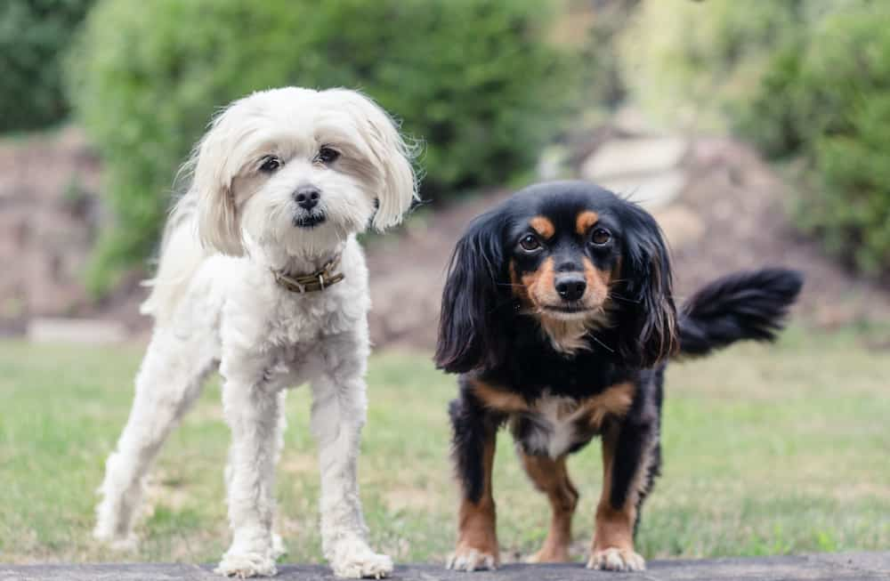 how-about-mixed-breed-dogs