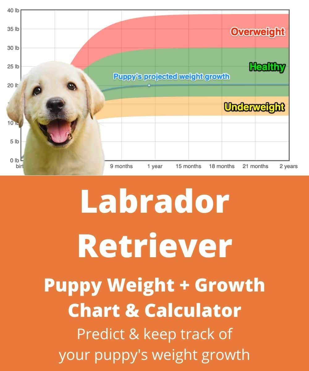 one month labrador puppy food