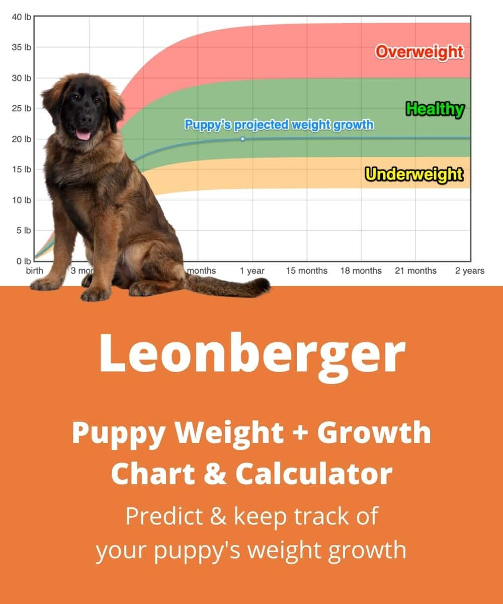 Leonberger Weight+Growth Chart 2021 - How Heavy Will My ...