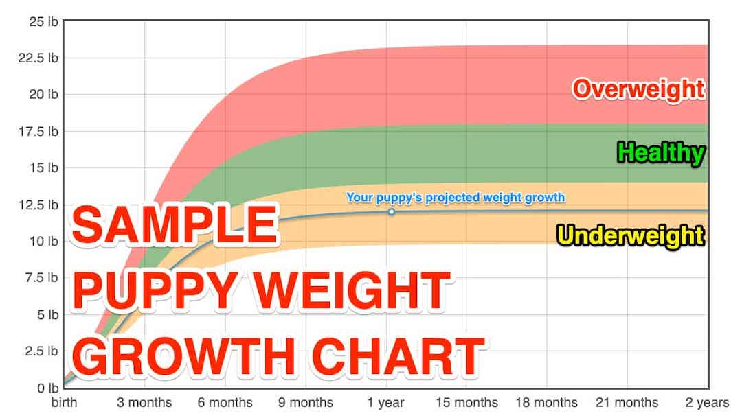 Puppy Weight Growth Chart